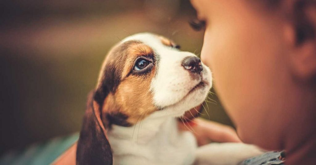 Pet Health; A Major Factor Behind The Well Being
